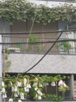Edogawa11kiuimo