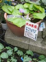 Edogawa20hana2_1