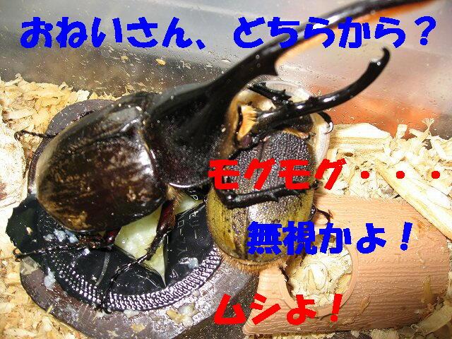 20070707_00491_1