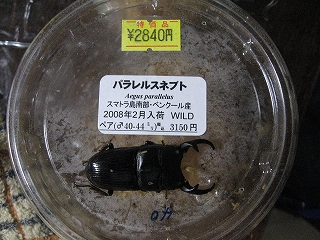 20080323_01891